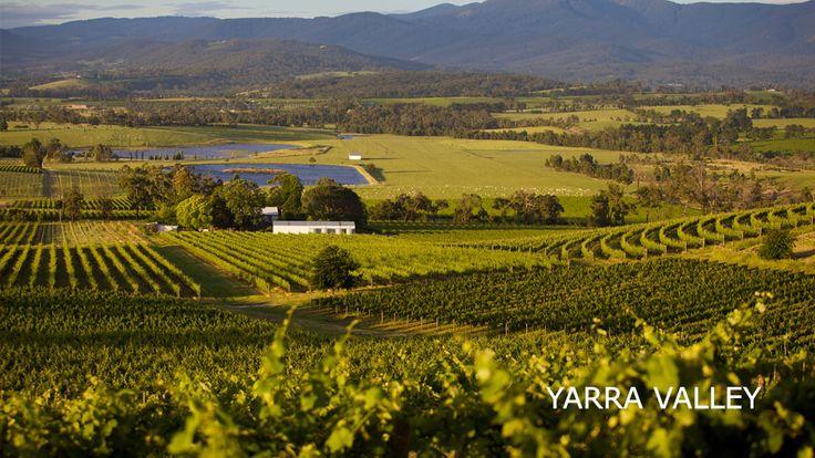 Voyage Victoria Australie - Yarra Valley