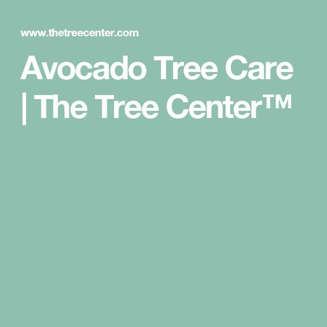 Avocado Tree Care | The Tree Center™