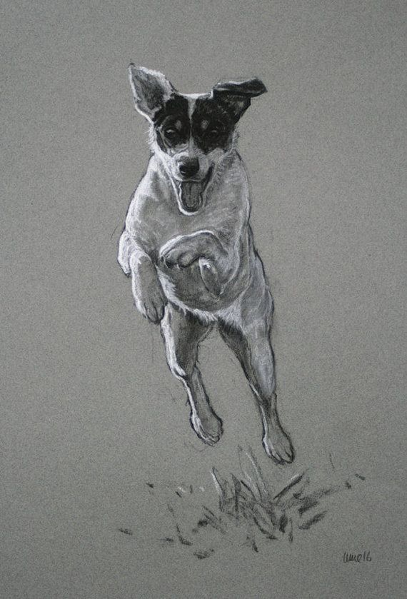 Jack Russell Terrier chien art print limited edition par Terrierzs