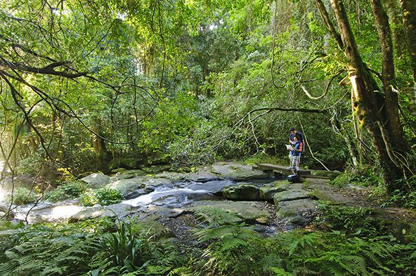 Moran Falls walking trail at O'Reilly's Rainforest Retreat #naturalbeauty #oreillys #bushwalks #australia #goldcoasthinterland