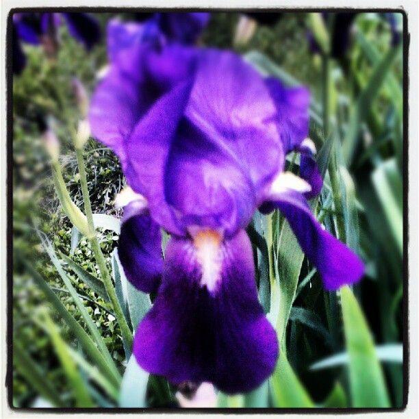 Thumbnail for Instagram Pinterest slideshow with Storify: META META!