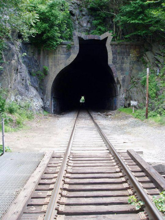 Kitty tunnel.