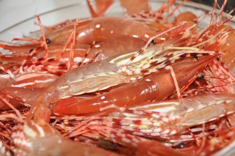 May 5, marks the official start of the Spot Prawn season here in BC for 2012. Much anticipation builds for this short 6-8 week season that is usually finished by the end of June. Spot Prawns are …