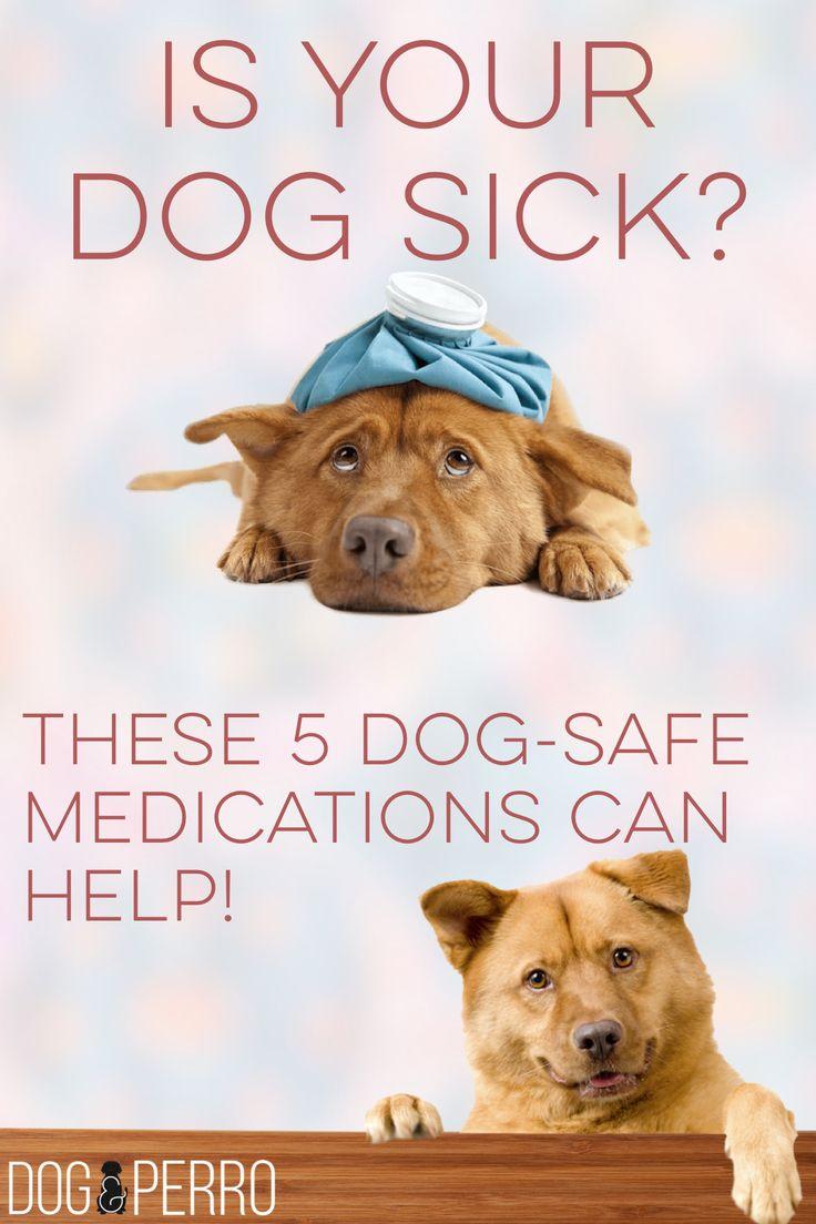 5 Dog-Safe Medications!