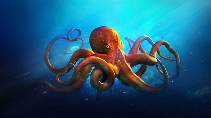 An orange octopus in blue sea water. Landscape water. download beautiful HD Wallpaper 1080p 2160p UHD 4K HD, for IOS devices iPhone, Android
