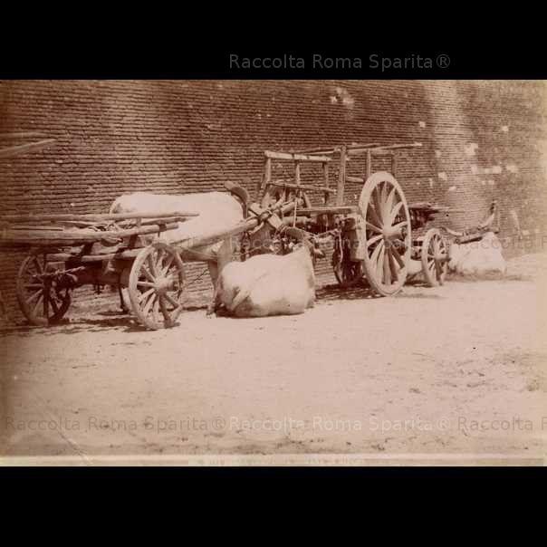 Buoi a riposo presso San Giorgio in Velabro. Anno: 1875