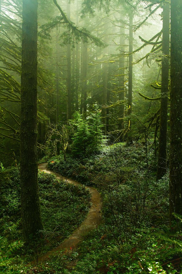 Mist and dappled light on a forest path (Silver Falls State Park) by Oksana Happy