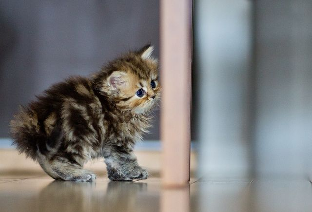 Look at that cute little ball of fluff!!: Picture, Photos, Animals, Adorable Kittens, Pets, Daisies, Kitties, Kittens Cats