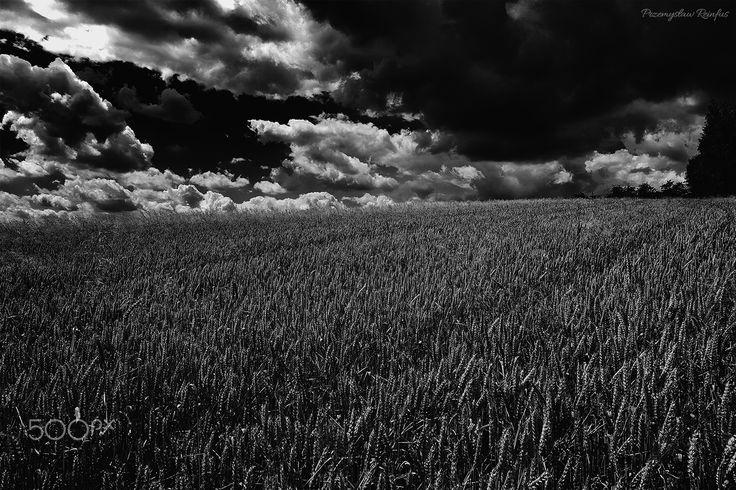 Wheat field - null
