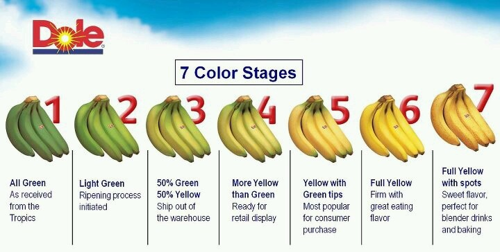 7 stages of bananas   food & fruit scenery   Pinterest ...