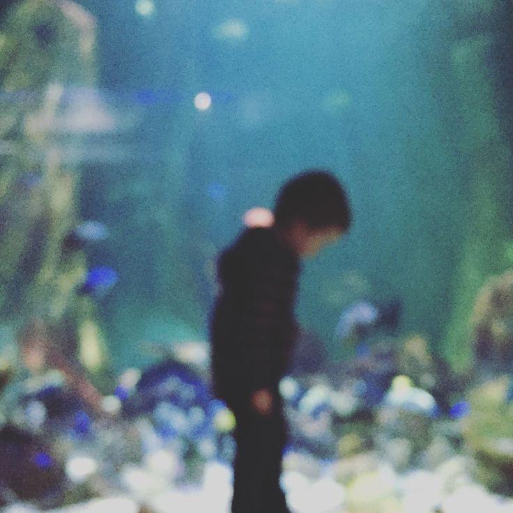 Boy at aquarium  #aquarium #wonder #colour