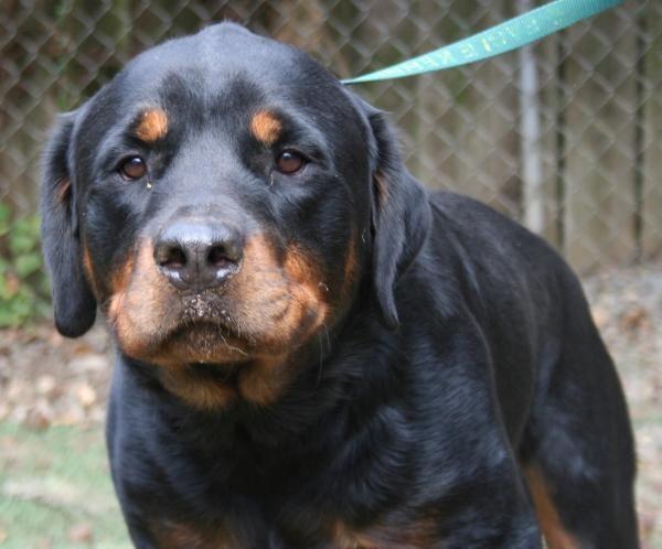 Thunder Dogs Dog Adoption Dog Insurance