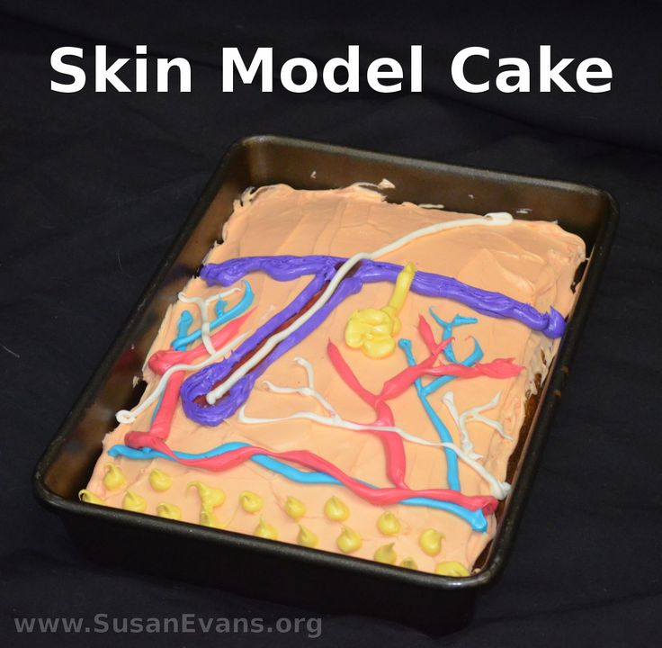 When studying the integumentary system in human anatomy, why not create a skin model cake? This is a great way to re-enforce the diagram of the human s