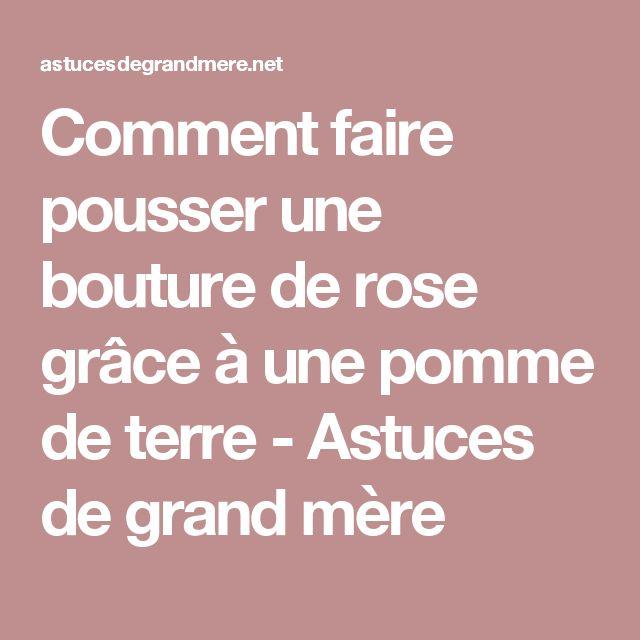 Les 25 meilleures id es de la cat gorie boutures de rose sur pinterest roses enracin es - Laurier comestible comment reconnaitre ...