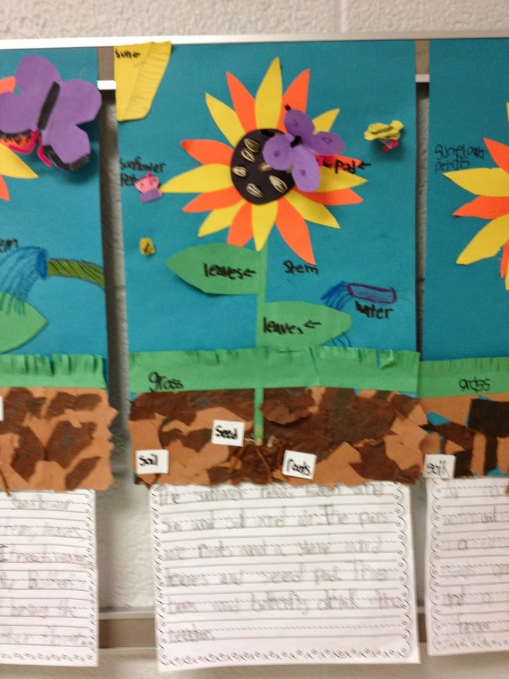 Fun friday activity sunflowerwriting and freebie first