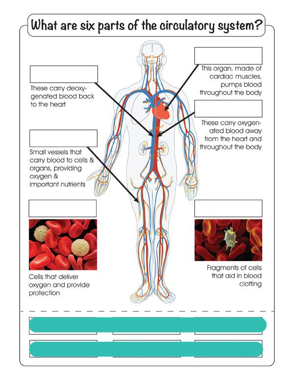 340 Best 5th Grade Science Human Body Images On Pinterest Human
