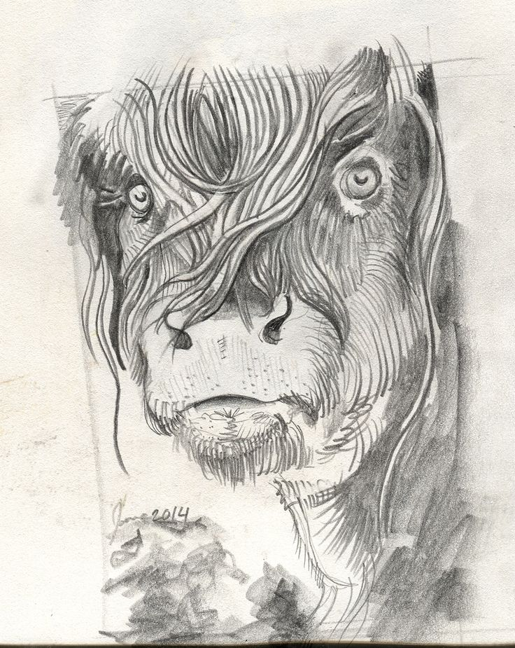 cow with long hair, graphite. 2014, James MacDougall