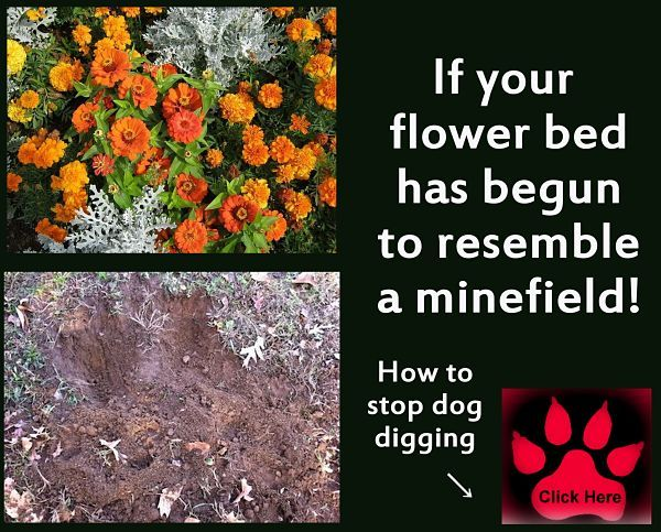 If Your Flower Bed Has Begun To Resemble A Minefield You