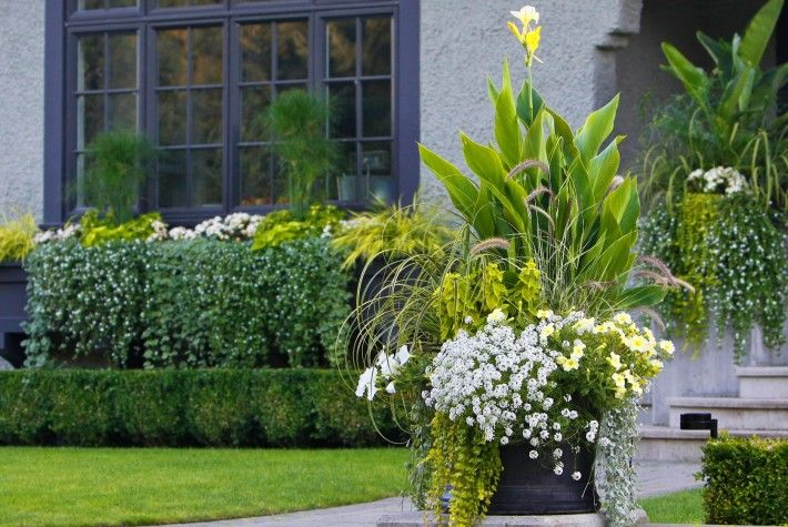 Container gardening landscaping landscape design canna for Perennial container garden designs