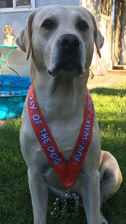 Luke ran his 1st official 5k for National Dog Day 2016.