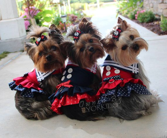 17 Best Images About Yorkies On Pinterest Flat Rate