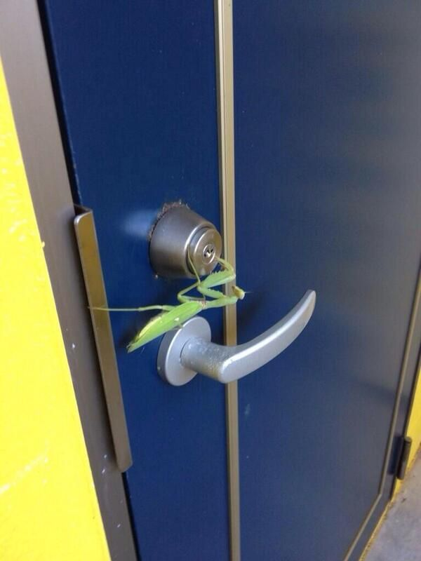 Lock picking / Mantis is unlocking the key / Twitter@miajTjmtjdbさん投稿