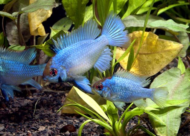 69 best images about dreaming of a fish tank on pinterest for Dream of fish tank