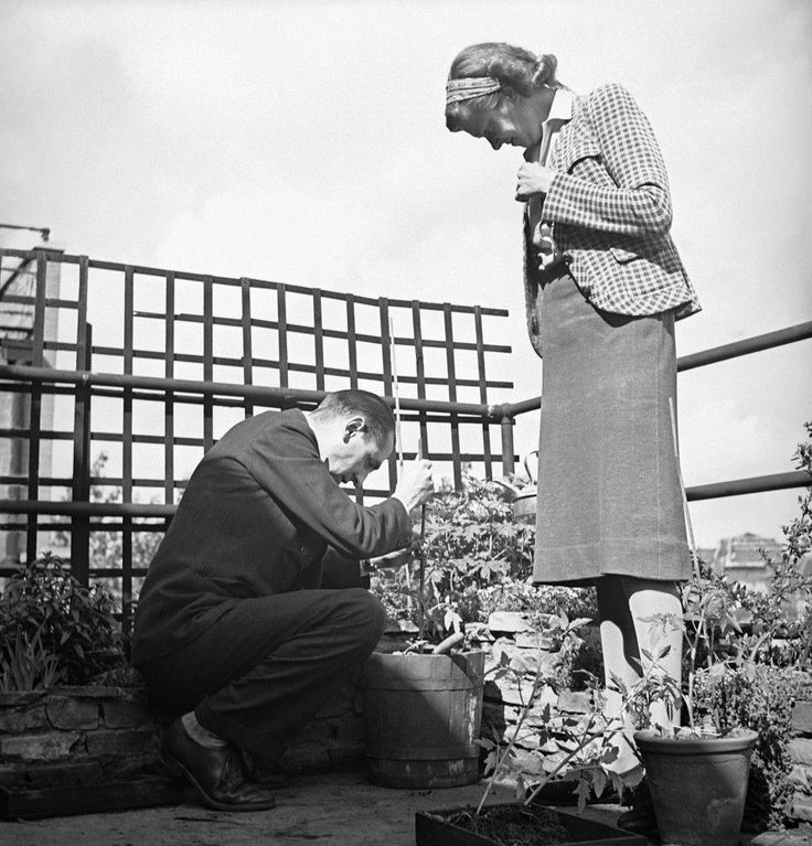 Robert Bunnelle, Chief of the London Bureau of the Associated Press, sets out a young tomato plant in an old butter tub in the roof garden of the apartment house in London on June 10, 1942 where he lived through the 1940-41 German blitz on the city, while Mrs. Bunnelle looks on with critical eye. Tomatoes sell for fifteen cents a pound in wartime London. The Bunnelles' apartment is in the central London District of Kensington. (AP Photo)