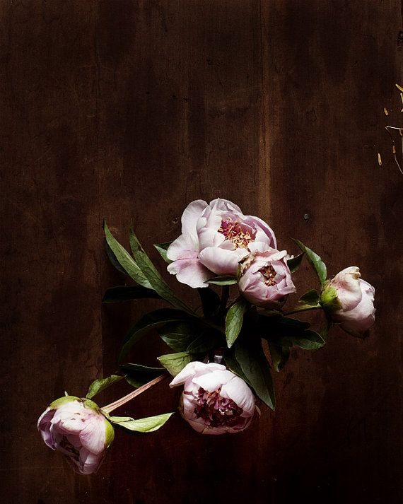 Kari Herer PhotographyPeonies Beautiful Flower, Kari Herer, Art, Flower Prints, Pink Brown, Botanical, Nature Beautiful, Floral, Pink Peonies