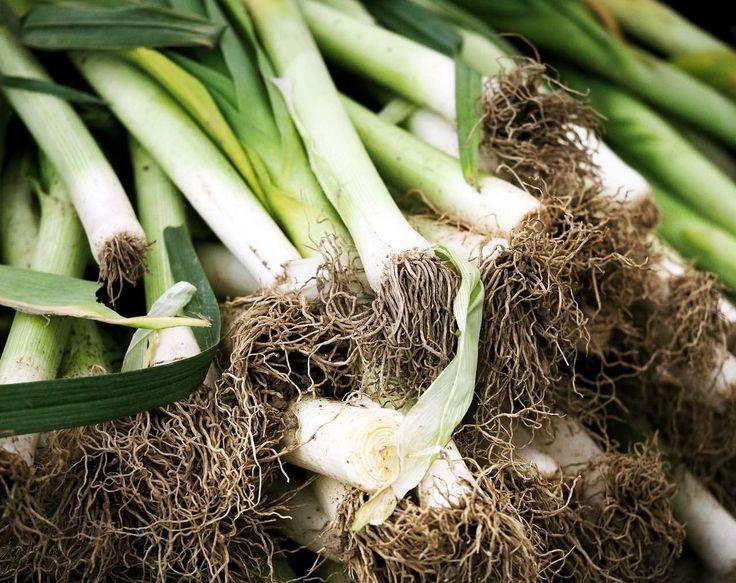 Lauch: Tipps zu Anbau, Pflege und Ernte