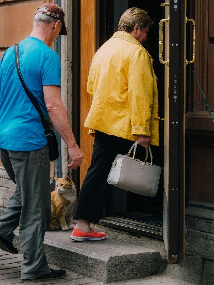 """Швейцар  Этот кот является """"душой"""" знаменитой пышечной на Большой Конюшенной в Санкт-Петербурге"""