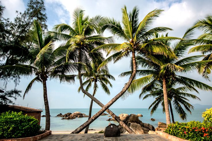 The twenty kilometers long Coconut Dream Corridor is a famous seashore scenery #SanyaRepin #SanyaHeartstoHearts