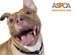 Take $20 off $100+ purchase – not including symbolic gifts or additional donations. Enter code ASPCA20OFF at checkout. Offer ends 12/31/14. Related Posts via Categories30% Off Sitewide at Hoover.com (1)20% Off Orders over $65 at Cesar's Way (1)PetSmart Black Friday (1)Entirely Pets Black Friday (1)60% off at Pet Food Direct (1)Save $10 off $60 or …