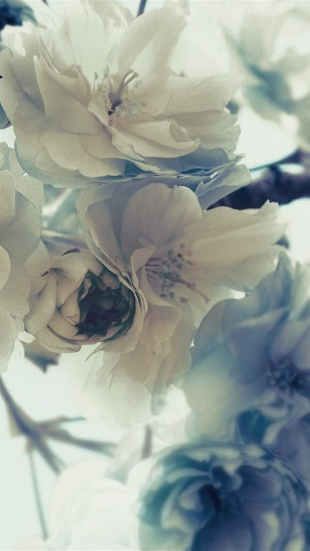 Картинки, картинки цветы нежные вертикальные