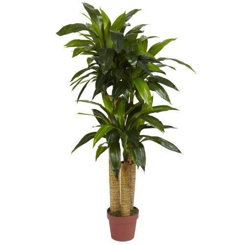 """awesome  For those who enjoy touching in addition to visual admiration, we have our four foot high Dracaena Silk Plant. ¡°Real to the touch"""" it¡¯ll fool bo...   https://www.silkyflowerstore.com/product/4-corn-stalk-dracaena-silk-plant-real-touch/"""
