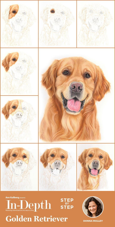 Golden Retriever In Depth Colored Pencil Tutorial Dog Drawing Tutorial Colored Pencil Tutorial Colored Pencils [ 1448 x 735 Pixel ]