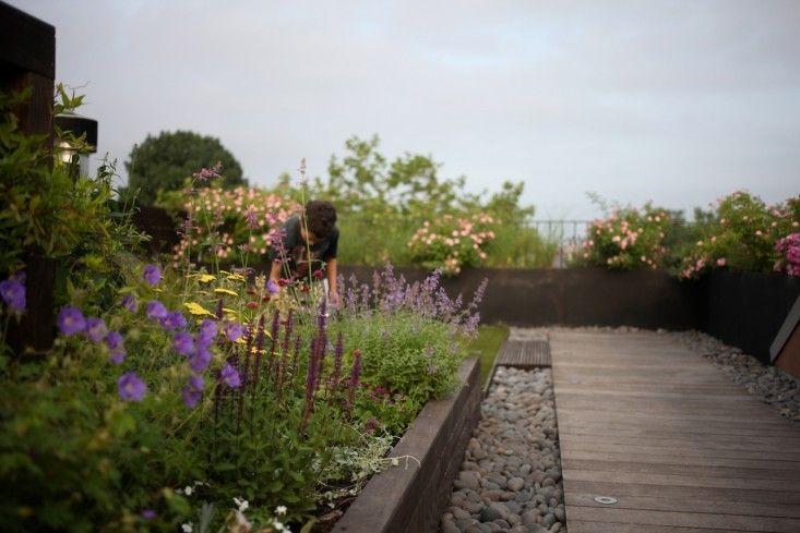 Mini meadow Brooklyn Rooftop ; Gardenista - Provided by Gardenista
