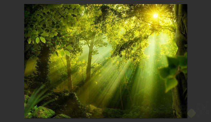 Fototapeta - W tajemniczym lesie, Artgeist - Wyposażenie wnętrz
