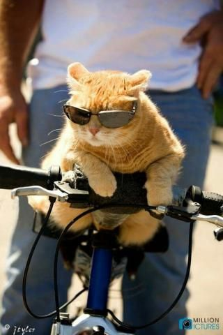 "PetsLady's Pick: Funny ""Bad to the Bone"" Cat Of The Day...see more at PetsLady.com -The FUN site for Animal Lovers"