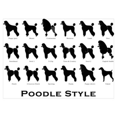 Poodle grooming! I think I'm the first one but SO want to try out one of those more OUTRAGEOUS styles, like #3.