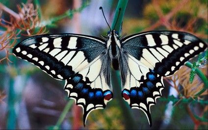 Common Questions - What do butterflies eat, information on butterflies, #EasyPin