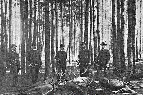 Правила охоты в царские времена  Рассказывая об охоте в царские времена, хочу остановиться на особенностях, связанных со сроками, способами и этикой охоты наших предков.  Передо мной — «Правила об охоте» 1895 года. Они предусматривают производство охоты по именным охотничьим свидетельствам, однако не распространяются на ряд губерний, где в то время разрешалась свободная охота. К числу этих губерний относились Архангельская, Вологодская, Олонецкая (нынешняя Карелия), Пермская, Вятская и…
