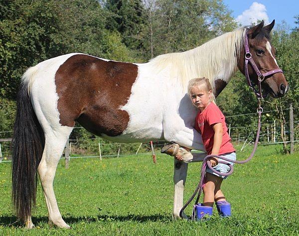 Indianerpony - Pferde kaufen in Scheffau - pferdeanzeiger.at