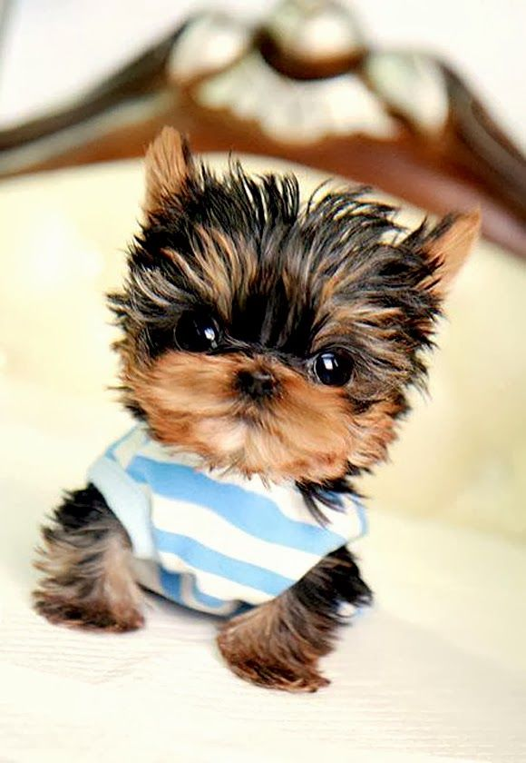 5 Tinniest puppies you have ever seen, seems like he has gelled his hair:D