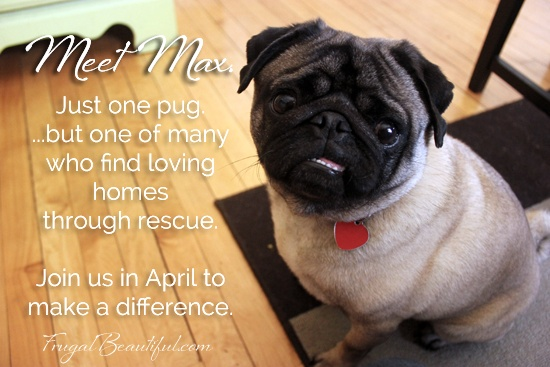 Buy A Blog Ad. Grow Your Traffic. Help A Pug.  We've raised 141 of 500 dollars...we need to sell more ads to help a pug! :) Thanks in advance!