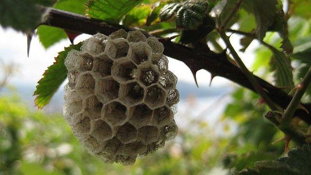 colmena de abejas en arbol - Buscar con Google