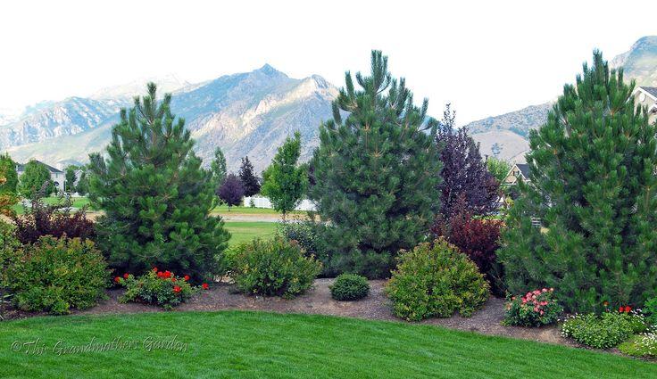 privacy garden phots | Eastward View of Austrian Pines 2009