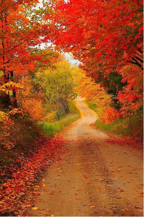 Autumn Cameo. Cadillac, Michigan