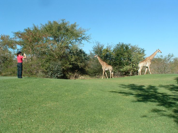 On safari during your Golf game.