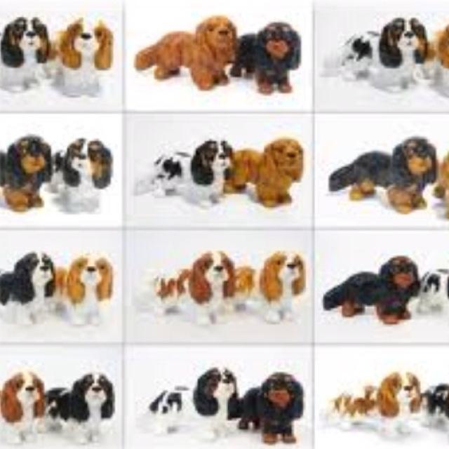Lynne Shaw Dog Training